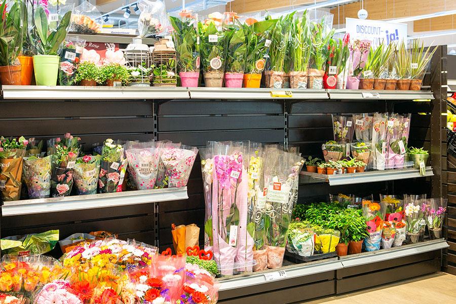 Blumen und Pflanzen in Heimertingen